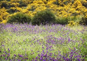 Blomsteräng 050406
