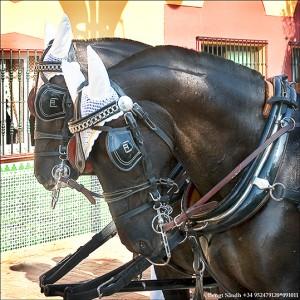 Hästar 091011