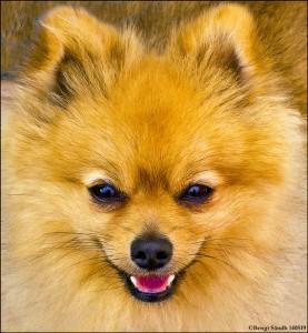 Lenas hund 140419