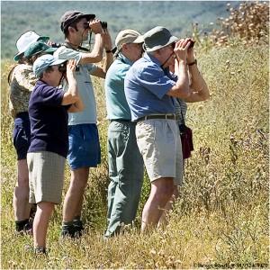 Ornitologer 020527