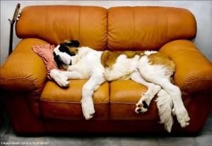 Fabian i soffan