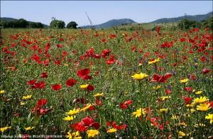 Blomsteräng 070509