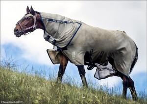 Häst 160529